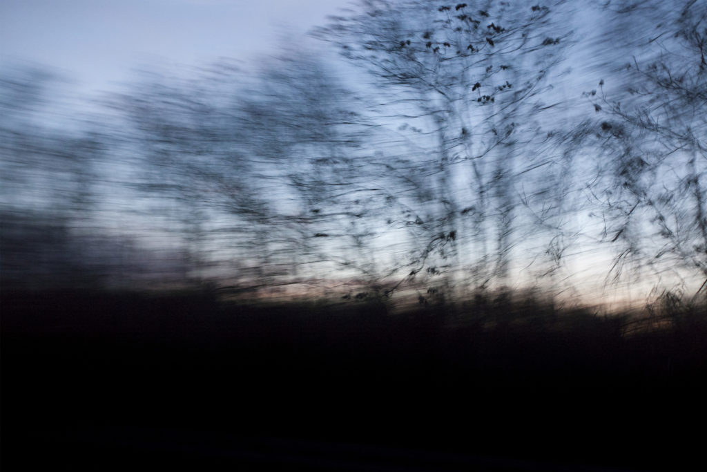 A partially blurry image of roadside trees at dusk