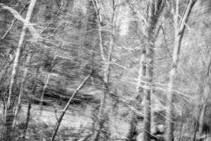 Partially blurred black and white image of a roadside forest and rural road