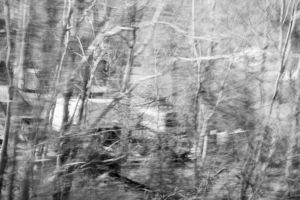 Partially blurred black and white image of a roadside forest and abandoned vehicles