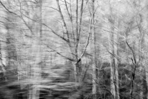 Partially blurred black and white image of a roadside forest in winter