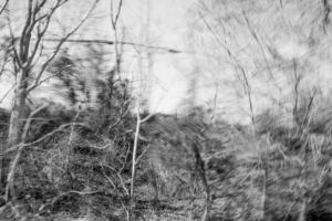 Partially blurred black and white image of roadside trees and brush in winter