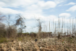 A partially blurry image of roadside grasses and brush in early spring