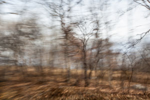 Partially blurred image of roadside trees in late fall