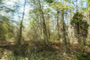 Partially blurred image of roadside trees turning green in early spring