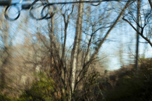 A partially blurred image of roadside powerlines and trees in late fall