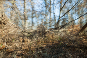 Partially blurred image of fallen roadside trees